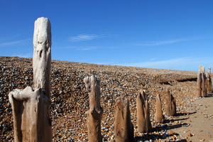 Wooden posts on a stony beach: A row of eroded wooden posts on a stony beach