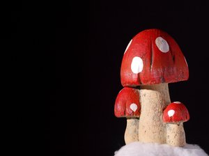 Mushroom, isolated: A group of (fake) mushroom isolated with black background