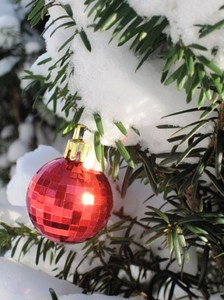 A Touch of Christmas: Single red Christmas decoration in an evergreen