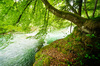 Natural River: The Mangfall River in Bavaria, Germany