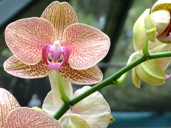 Tropical Orchids: Beautiful orchids in Singapore