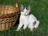 kitten and basket: none