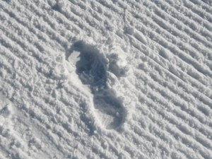 footprint: none