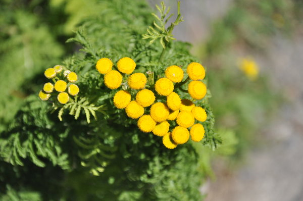 Free Stock Photos Rgbstock Free Stock Images Little Yellow