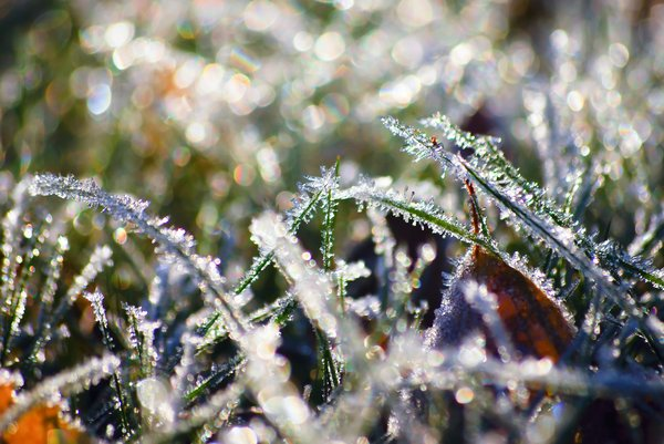 Frosty grass 3: Frosty grass in the early morning sun, November 2008