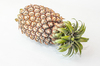 Pineapple 1: Photo of pineapple