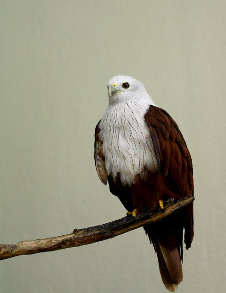 Regal Eagle 2: Snapshot of an eagle at the bird park