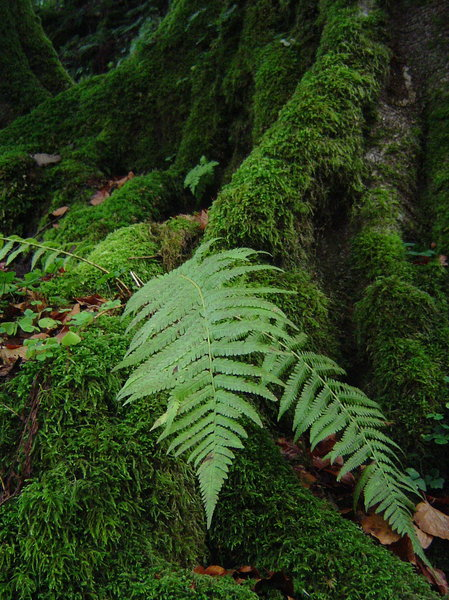 fern and moss: moss-grown tree roots and fern leaves