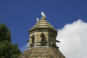 Pigeons on a dovecote: White pigeons on a dovecote in West Sussex, England.