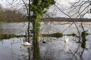 Winter floods: Flooded fields at Arundel, West Sussex, England.