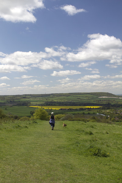 Walking the dog: A dog walker on the Chiltern hills, Oxfordshire, England.