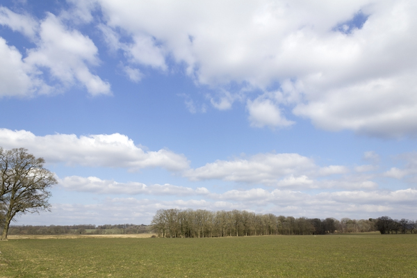 Farm landscape: Farm fields and windbreak woodland in West Sussex, England, in late winter.