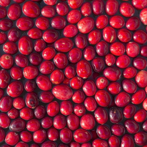 Cranberries: Cranberries being prepared for cooking.