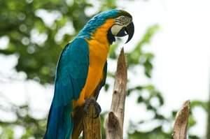 Parrot: Parrot at the zoo
