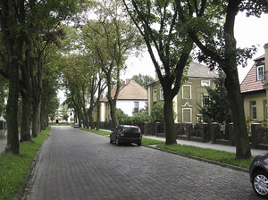 Street with trees: A street surrounded with trees. Inowrocław, Poland.