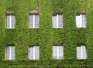 Vine house: A house covered with vine