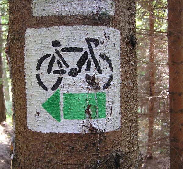 Bicycle trail: A bicycle trail on the tree.