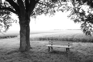 Bench and tree 1: A bench in the nature