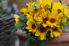 yellow bouquet in a pot: lovely yellow sunflowers in a terracotta pot