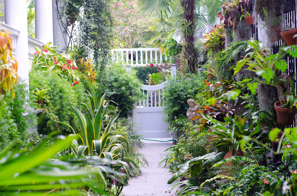 Carolina Garden Path: Charleston South Carolina has hundreds of these secret gardens, almost all are a delight for the eye. Here you see a hot July garden path, photo taken in the midday.