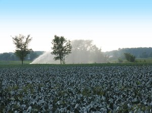 Watering the cabbage patch: The farmers irrigating the cabbage fields in St Augustine, Quebec