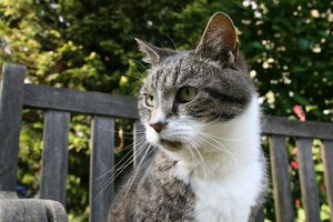 Tabby named Buddy: A few test shots that I took of one of my cats.
