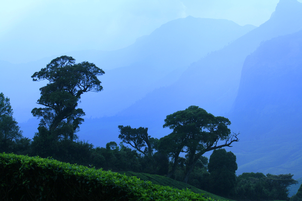 Scenery: Taken From Munnar in Kerala