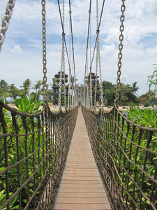 swinging along: swinging suspension bridges