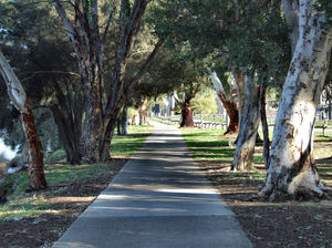 tree-lined path: riverside tree lined path