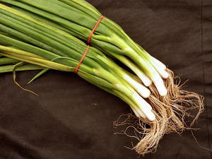 spring onion bunches1: small bunches of raw spring onions