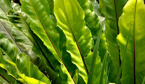 splattered garden green light: rain splattered large tropical garden fern