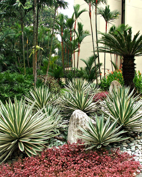 palm garden path: small palm garden with pebble path