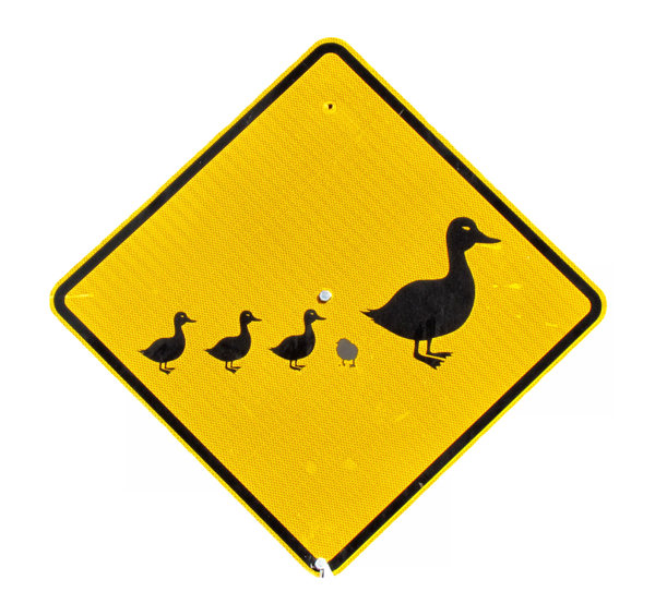 walk like a duck: be a duck - not a chicken - caution sign warning of ducks (and chickens) crossing roadway