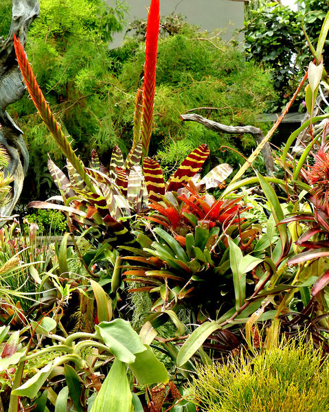 bromeliad background1: variety of bromeliad flowers and foliage