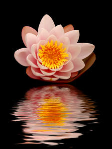 Waterlily:
