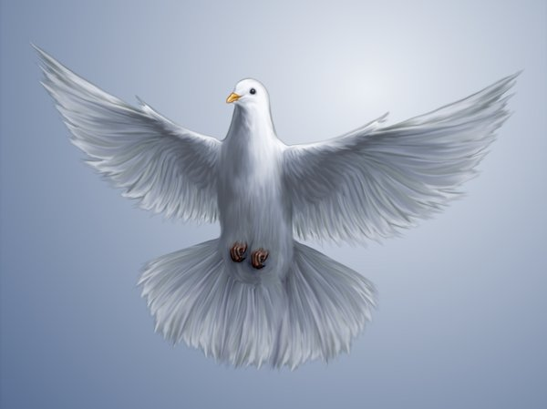 Dove wallpaper: