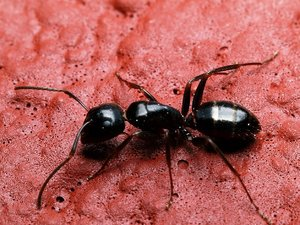 ant: No description