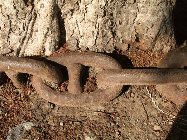 Nature in chains-: A tree with a heavy anchor chain-
