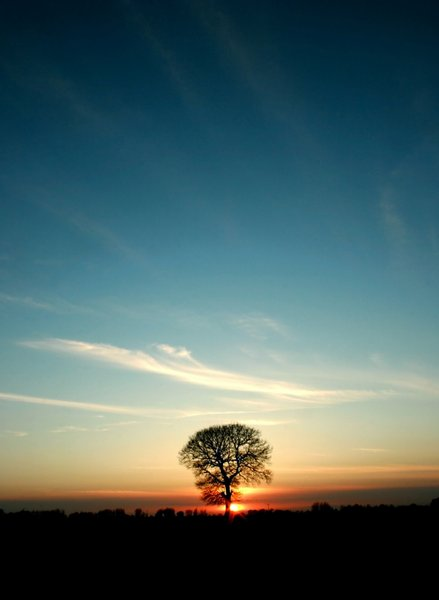 Sun Down: A tree set against a setting sun