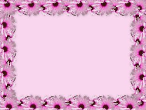 Floral Border 23: Pink floral border on blank page. Lots of copyspace. Would make a great banner or card, note or background. Looks much better in the large version.