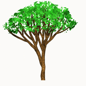 Leafy Tree Graphic 1: A graphic of an isolated leafy tree against a white background.