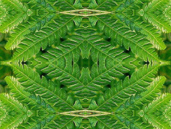 Abstract Fern: Abstract of a beautiful tree fern frond.