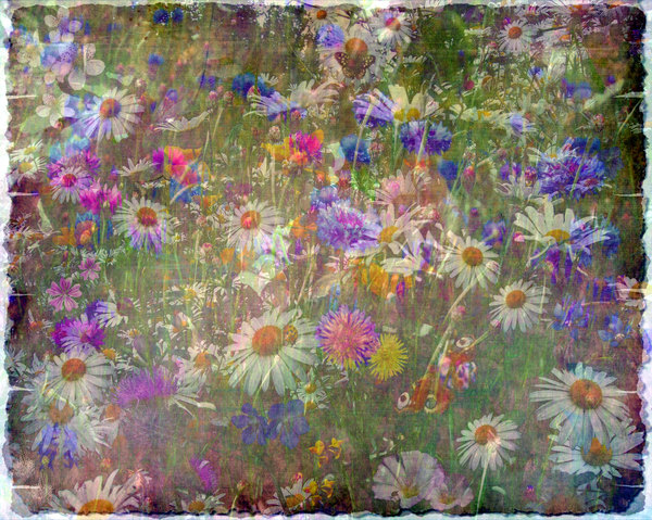 Wildflower Collage 3: A grungy collage of wildflowers made from public domain images, with a canvas texture. You may prefer these: http://www.rgbstock.com/photo/nU9Llsq/Leafy+Collage+2  or  http://www.rgbstock.com/photo/nTCGQ2G/Victorian+Border
