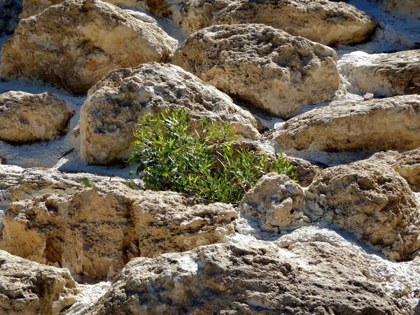 green growth potential1: almost barren rock mound with growing plant potential