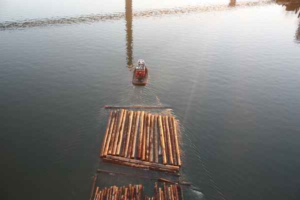 log raft, fraser river: tugboat towing log raft