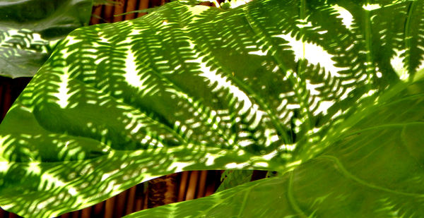 green shadow patterns3