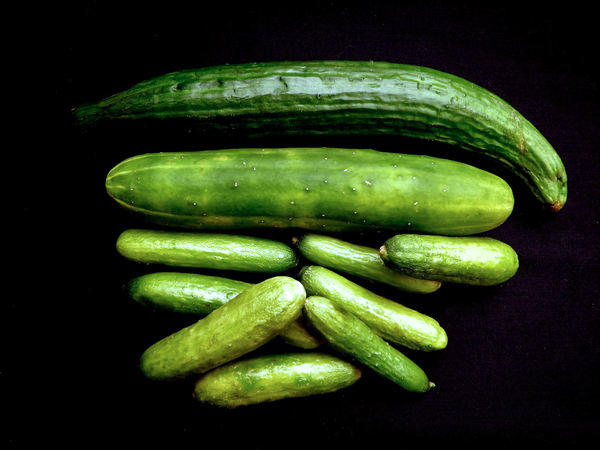 cucumber varieties2: varieties of fresh cucumbers