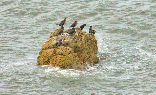 Seabirds on rock