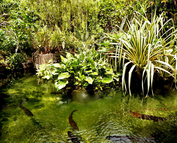 garden fishpond1: plants & fish in garden fishpond
