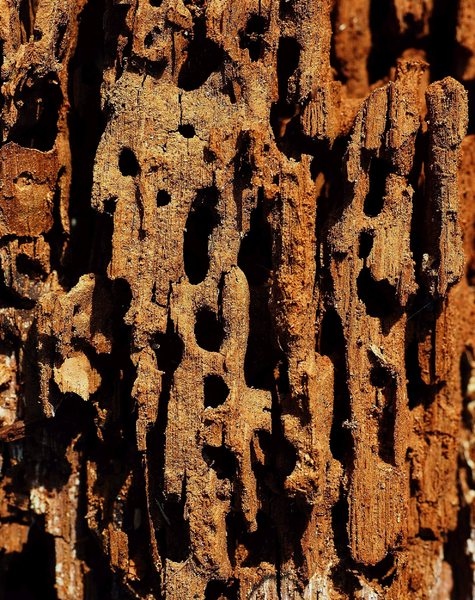 Patterns of decay-: Patterns of decay-: Macro of a rotten trunk of wood.
